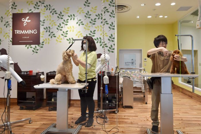 dog grooming cheltenham