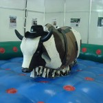 Rodeo Bull rides