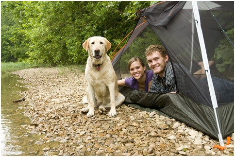 Camping – Do it Doggy Style
