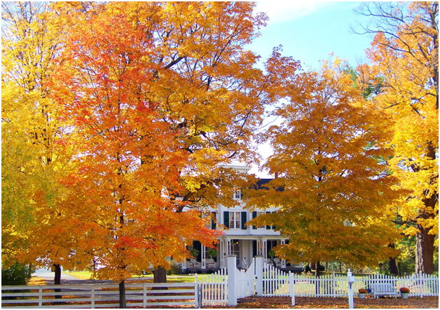 Home Maintenance Checks You Should Do in Autumn