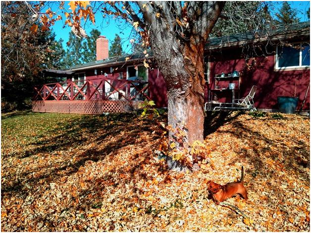 Home Maintenance Checks You Should Do in Autumn2